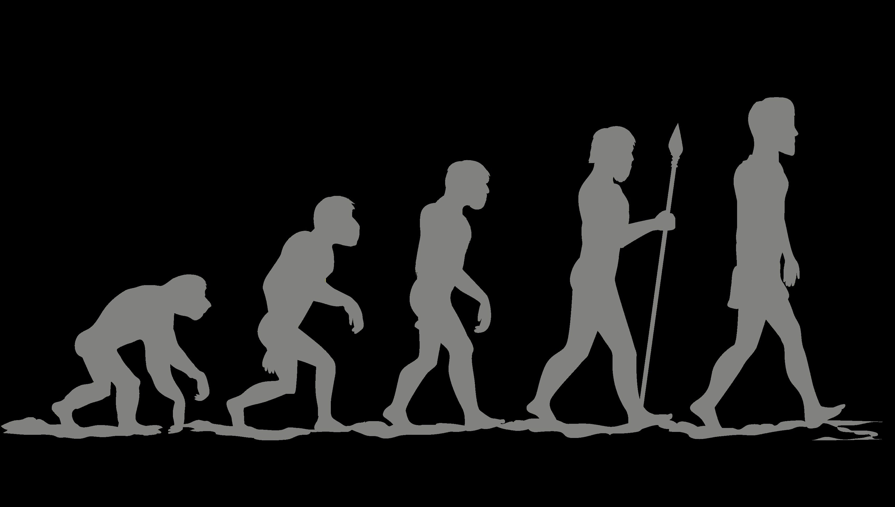 The evolution of human evolution